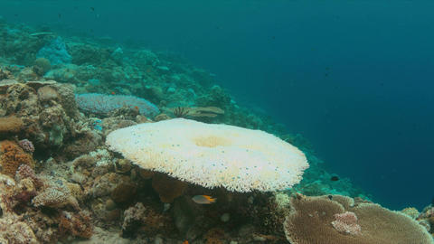 Coral bleaching Live Action