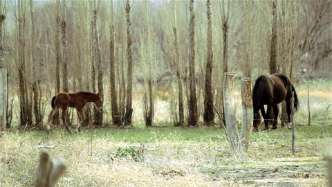 Wild Foal Next To Mother In The Forest Footage