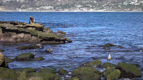 Two videos of group of seals in real slow motion Footage