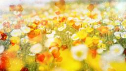 Flower garden Animation