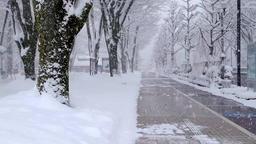 雪の歩道 Snowy Path Toyama Japan ライブ動画