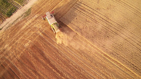 Harvester combine harvester harvesting wheat Live Action