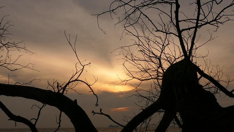 Amazing sunset view at the beach with dead tree silhouette foreground Footage