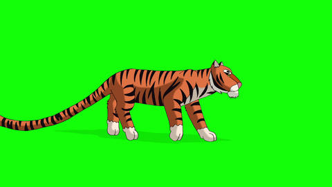 Tiger Walks. Animated Motion Graphic Isolated on Green Screen Animation