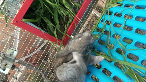 Small rabbit in the cage (2) Footage