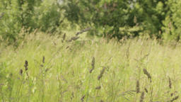 Spikelets In A Forest Glade Footage