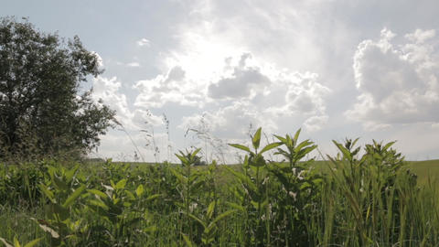 Green Field Under Sunny Skies dolly shot Footage