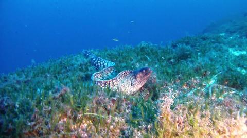 Moray eel - underwater scene marine life Live Action