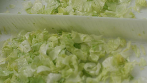 Boxes with Lettuce Move Slowly on Production Line Footage