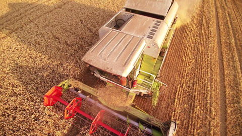 Aerial view combine harvested wheat field Footage