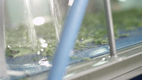 Closeup Special High-tech Machine Washes Lettuce Footage