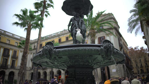Curious bird sitting on fountain at Plaza Real, looking around at many tourists Footage