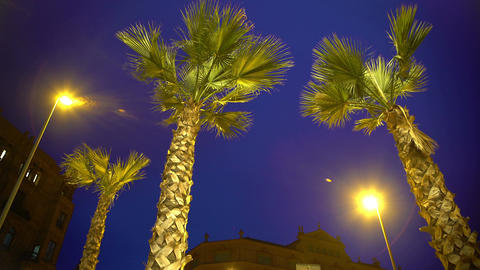 Tall palm trees against night sky background, stormy weather at exotic resort Footage