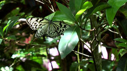 Malaysia Penang island 035 butterfly with beautiful pattern Footage
