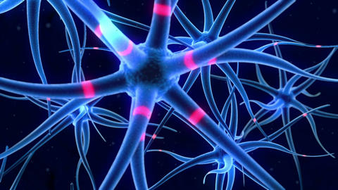 Flying around nerve cells Animation