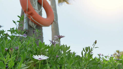Video of orange lifebuoy on the palm tree in 4K Footage