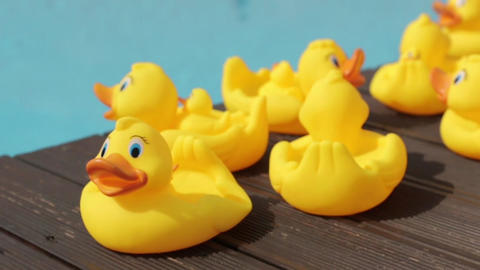 Yellow Rubber Ducks By The Pool 5 shots in 1 Footage