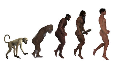 Evolution, the classic scheme, animation, white background Animation