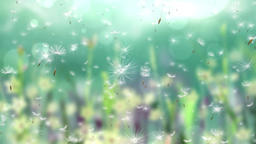 Dream Dandelion (4) CG動画素材