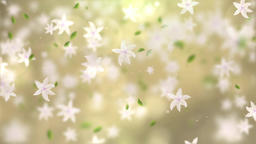 Falling Flowers (1) Animation