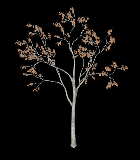 Black tree animation loopable with alpha chanel - 3 Animation