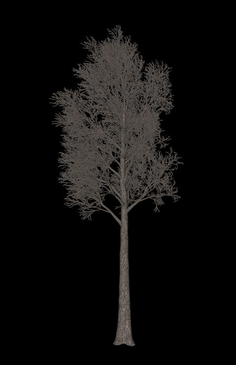 Black tree animation loopable with alpha chanel - 5 Animation