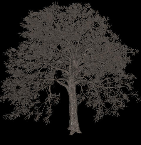 Black tree animation loopable with alpha chanel - 6 Stock Video Footage