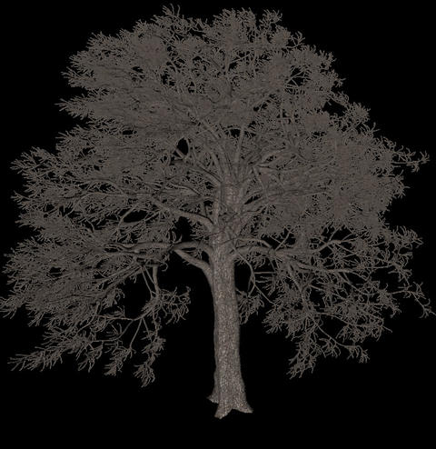 Black tree animation loopable with alpha chanel - 6 Animation