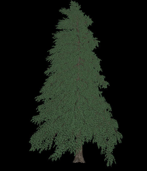 Tree animation loopable with alpha chanel - 2 Animation