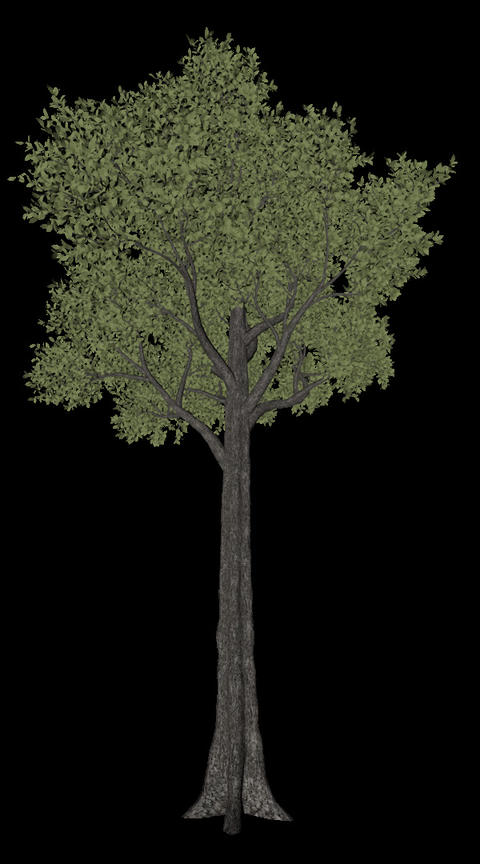 Tree animation loopable with alpha chanel - 3 Animation