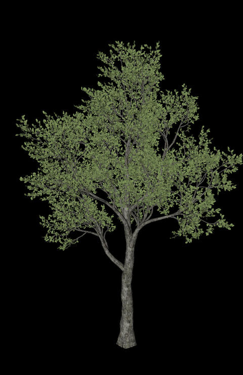 Tree animation loopable with alpha chanel - 5 Animation
