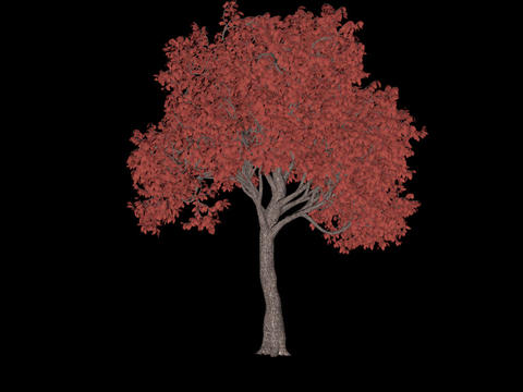 Tree animation loopable with alpha chanel - 7 Animation