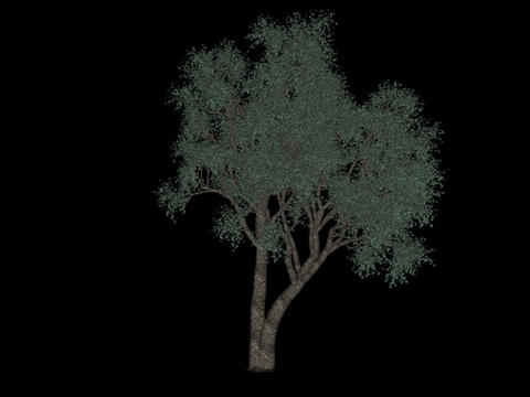 Tree animation loopable with alpha chanel - 10 Animation