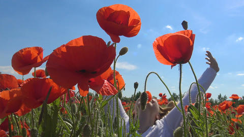 A flowering poppy field near Krasnodar. Russia Footage