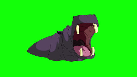 Hippo Open Mouth. Animated Motion Graphic Isolated on Green Screen Animation