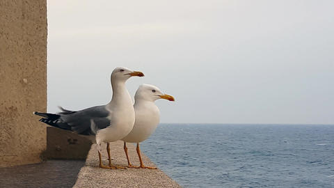 Two Seagulls On Sea Front Wall Footage