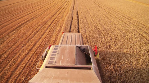 combine harvester working on the golden field Filmmaterial