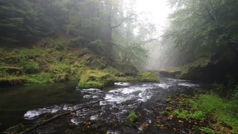 river Kamenice in autumn, Bohemian Switzerland Footage