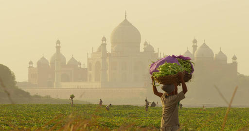 Local farmers with the Taj Mahal as their backdrop Footage