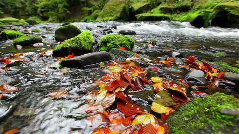 river Kamenice in autumn, Bohemian Switzerland