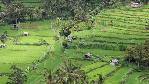 field terraces close to mount Agung, Bali Footage