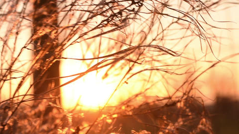 Beautiful nature scene with blooming flowers in sun flare. Slow Motion Live Action