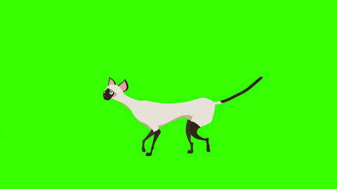 Siamese Cat, Meow and Walking Motions: Loop + Matte Animation