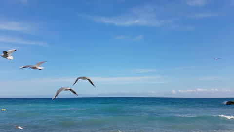 Seagulls Flying At The Sea Footage