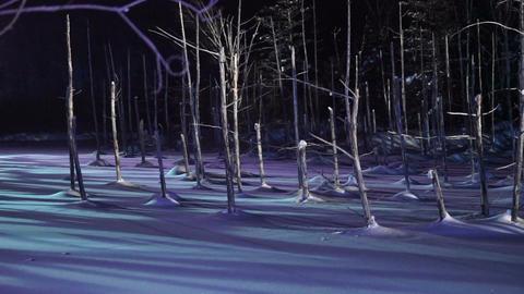 Blue pond illumination light up in winter night at Biei, Hokkaido, Japan. During Footage