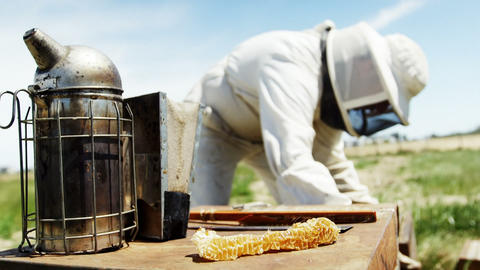 Hive smoker on beehive in apiary Live Action