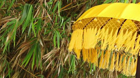 Umbrella, bamboo and wind Footage