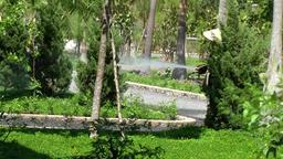Vietnam Phú Mỹ district villages 014 an asian monk pours plants Footage