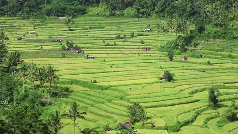 View of rice terraces Footage