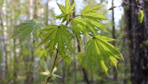 Spring life of plants of the European forest Footage